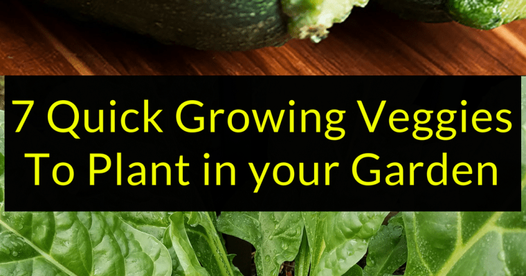 7 Quick Growing Veggies To Plant in your Garden