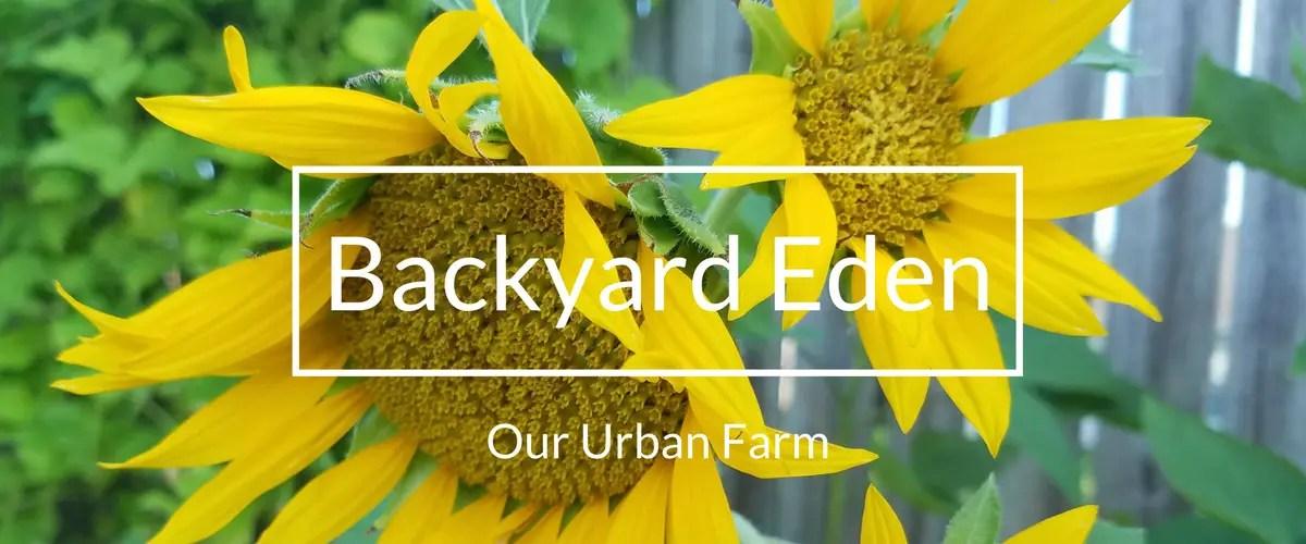 Urban Farm, Urban Farmer, Backyard farm, backyard farmer, backyard gardener, backyard garden, Backyard Eden, www.backyard-eden.com