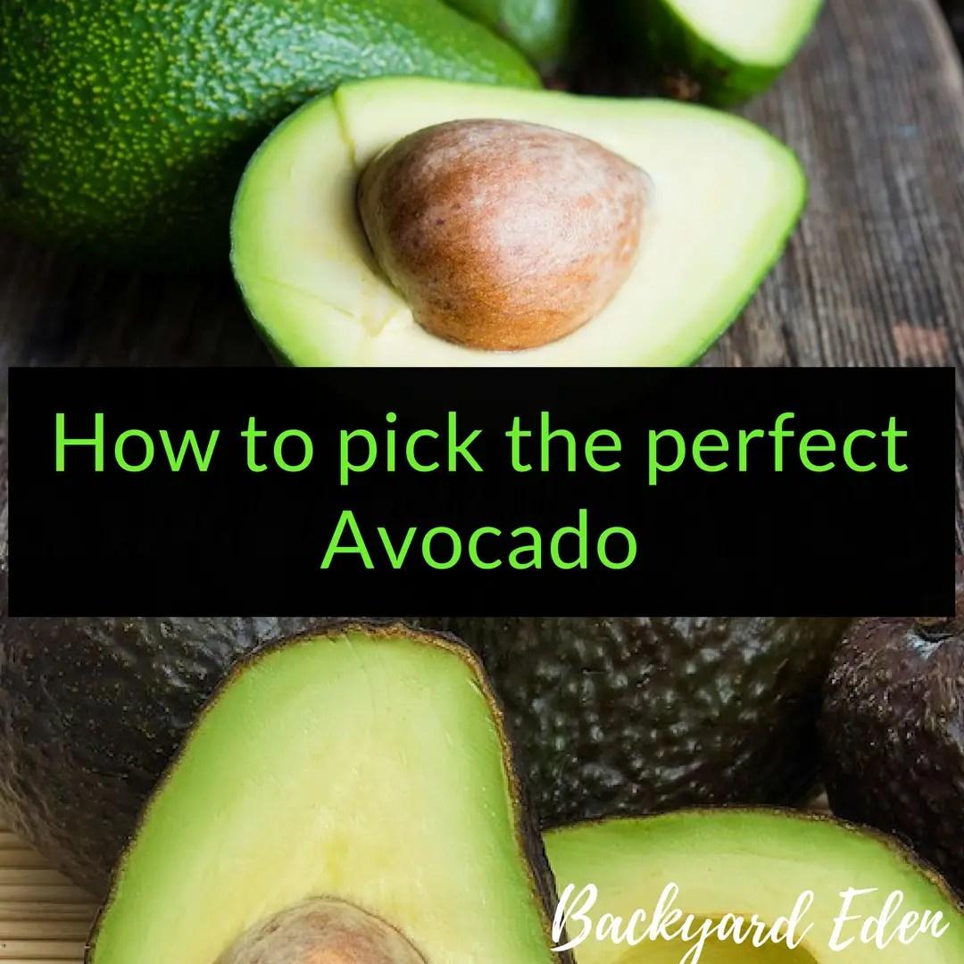 How to pick the perfect avocado, avocados, Backyard Eden, www.backyard-eden.com, www.backyard-eden.com/how-to-pick-the-perfect-avocado