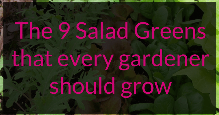 The 9 Salad Greens that every gardener should grow
