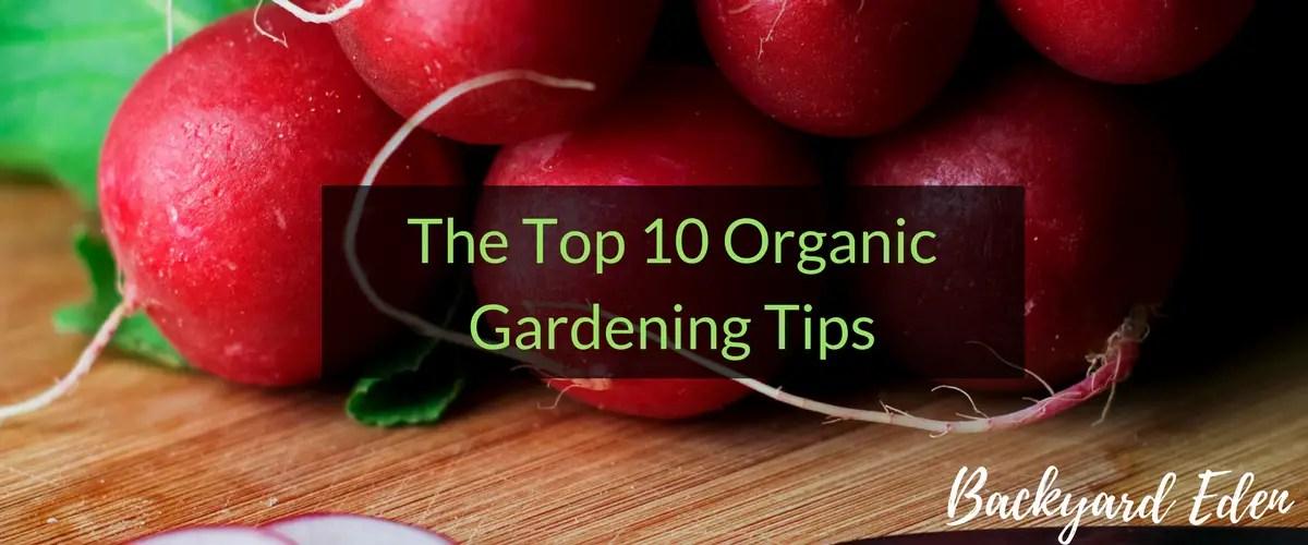 Top 10 Organic Gardening Tips, Organic Gardening Tips, Backyard Eden, www.backyard-eden.com, www.backyard-eden.com/top-10-organic-gardening-tips