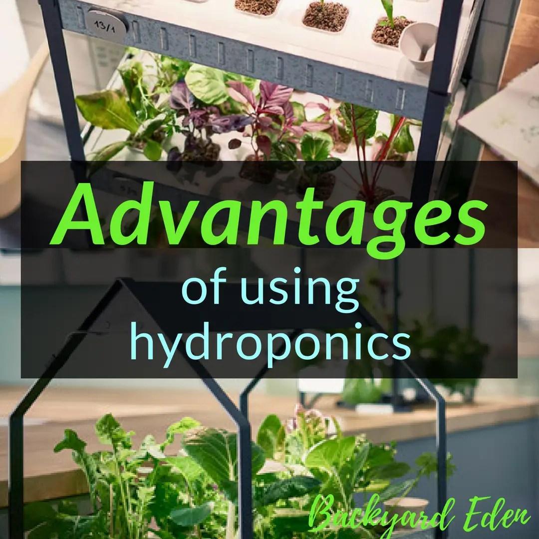 Advantages of using hydroponics, hydroponics, Backyard Eden, www.backyard-eden.com, www.backyard-eden.com/advantages-to-using-hydroponics