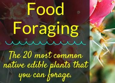 Food Foraging EBook, Backyard Eden, www.backyard-eden.com, www.backyard-eden.com/food-foraging-ebook