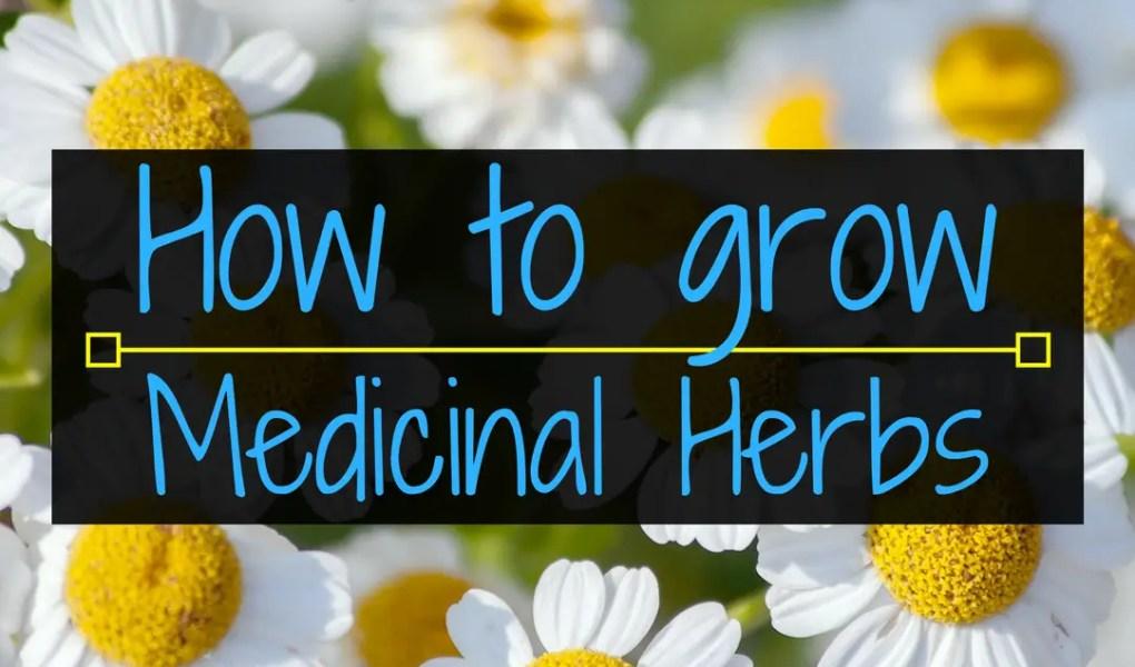 How to grow medicinal herbs, medicinial herbs, herbs, Backyard Eden, www.backyard-eden.com, www.backyard-eden.com/how-to-grow-medicinal-herbs