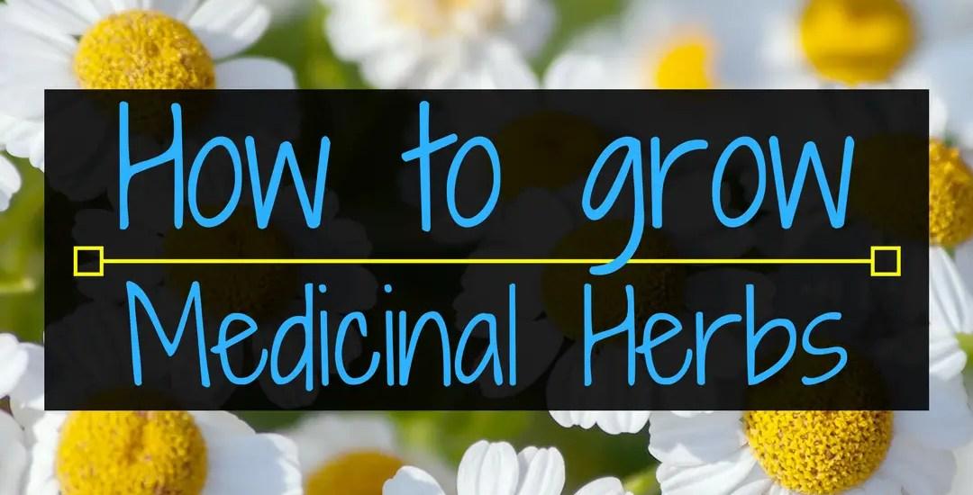 How to grow medicinal herbs