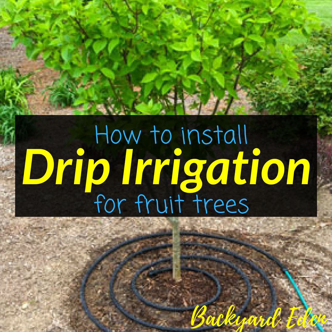How to install drip irrigation for fruit trees
