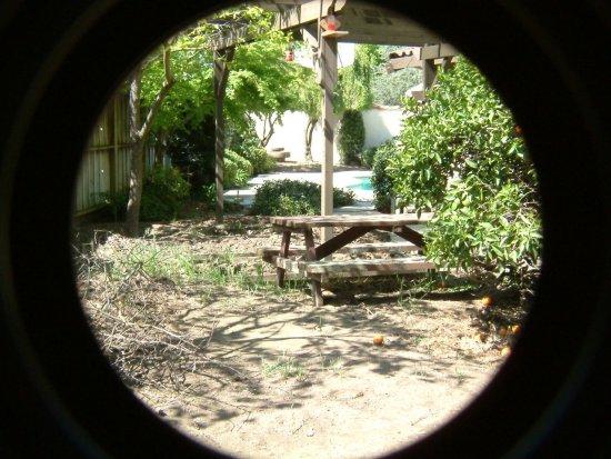 Backyard landscape for birds photos - Backyard Birds of ... on Birds Backyard Landscapes id=11684