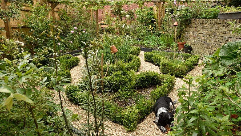 An overview of the garden showing the clipped box hedging, with a dog lying on the path.