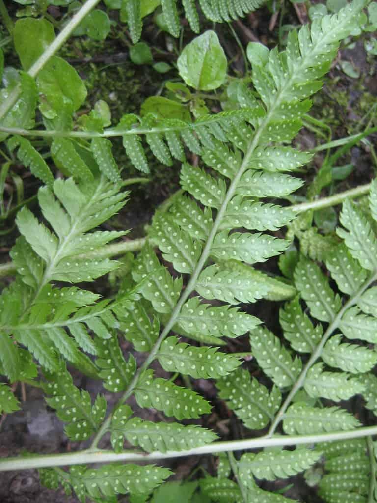 Outdoor Plants Grow Water
