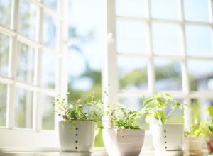 herbs-in-window-sill