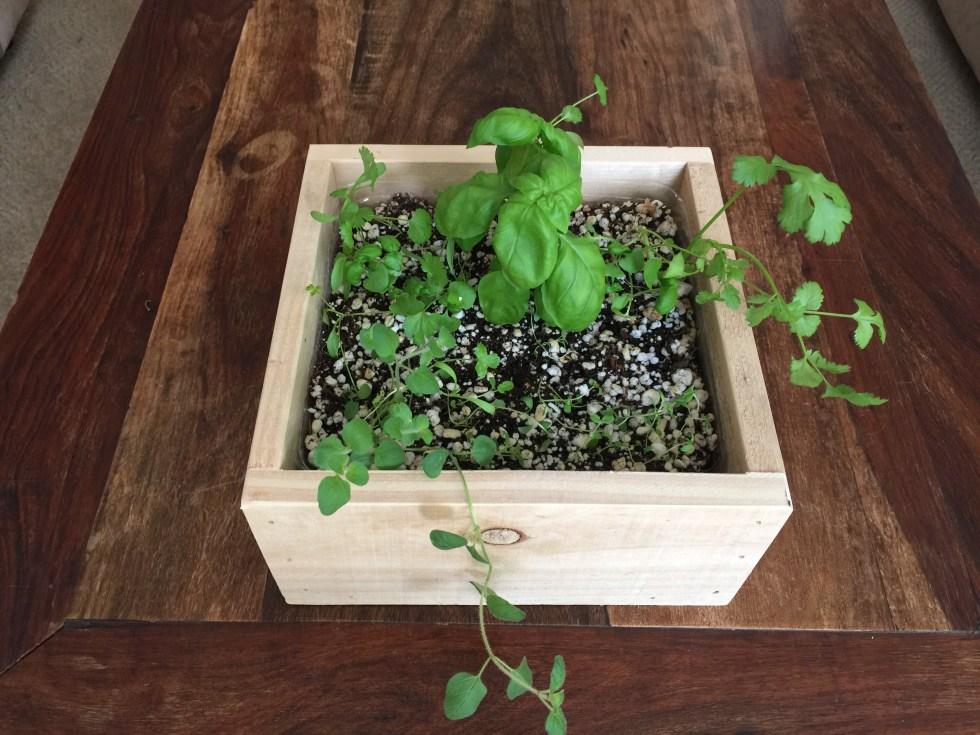 cedar-square-indoo-herb-garden