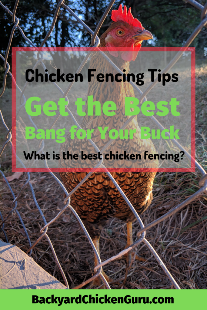 Chicken Fencing Get The Best Bang For Your Buck Raising Backyard Chickens