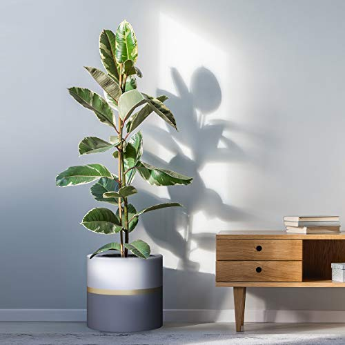 10'' Plant Pot by HOMENOTE, Modern Large Planter 10'' Plant Pot by HOMENOTE, Modern Large Planter with Drainage Plug - Gold and Grey Detailing - Perfect Fits Mid Century Plant Stand.