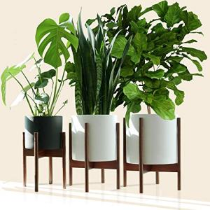 """Fox & Fern - Multi-Tiered Plant Stands - Set of 3-8""""/10""""/12"""" - Acacia Wood"""