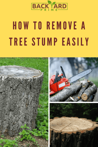 This is How You Can Easily Remove a Tree Stump 6