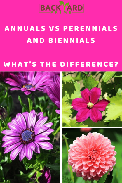 Annuals Vs Perennials and Biennials, What's The Difference? 4