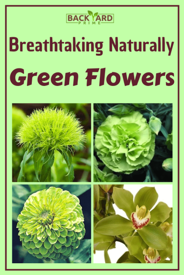 Breathtaking Naturally Green Flowers with Pictures 8