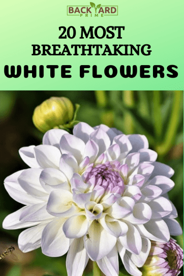 20 Most Breathtaking White Flowers in The World 21