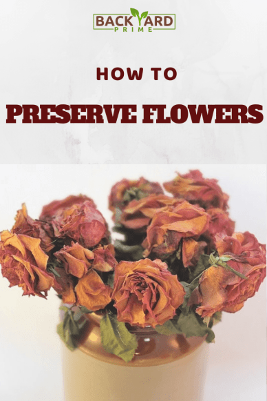 How to Preserve Flowers and Roses? 2
