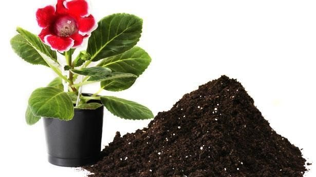 Potting Soil or a Potting Mix? How to Purchase the Right One? 2