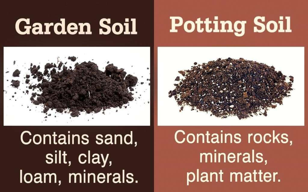 Potting Soil or a Potting Mix? How to Purchase the Right One? 3