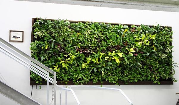 All That You Need to Know About the Living Walls Planters and Vertical Gardening?