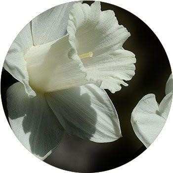 20 Most Breathtaking White Flowers in The World 13