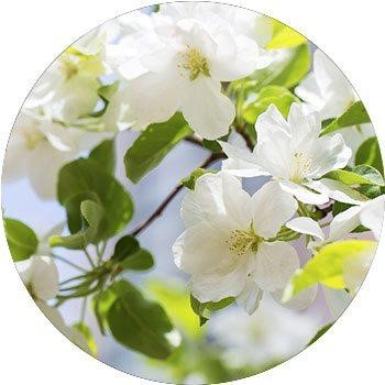 20 Most Breathtaking White Flowers in The World 16