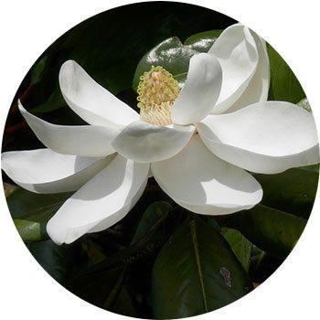 20 Most Breathtaking White Flowers in The World 9