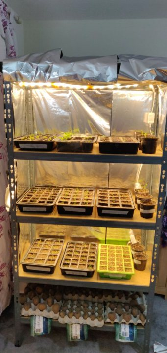 Succulents Grow Tent Setup Guide for Beginners 6