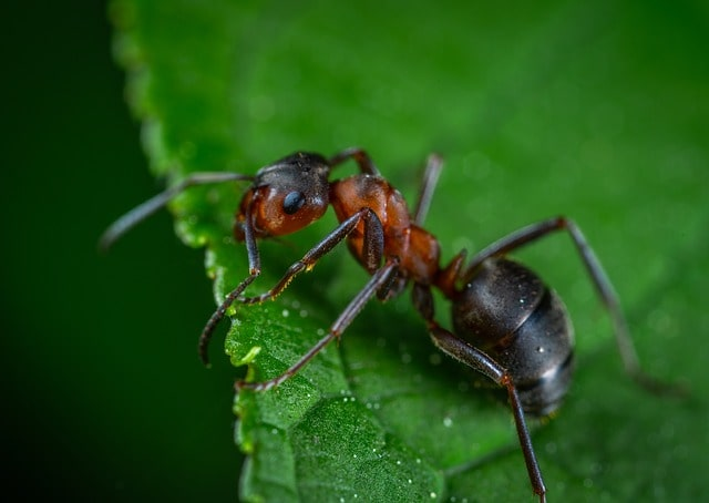 How to Get Rid of Ants in Your Yard? Natural Recipe!