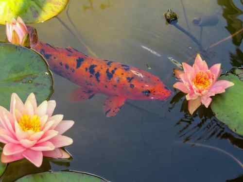 Easy Tips to Growing Water Plants for Your Pond 3