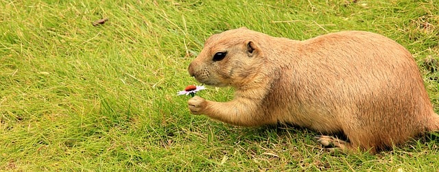 11 Tips to Keep Gophers Away from Your Garden