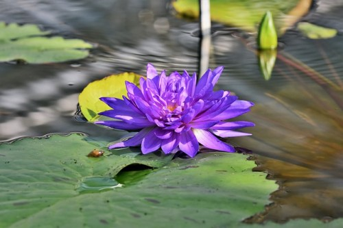 Easy Tips to Growing Water Plants for Your Pond 13