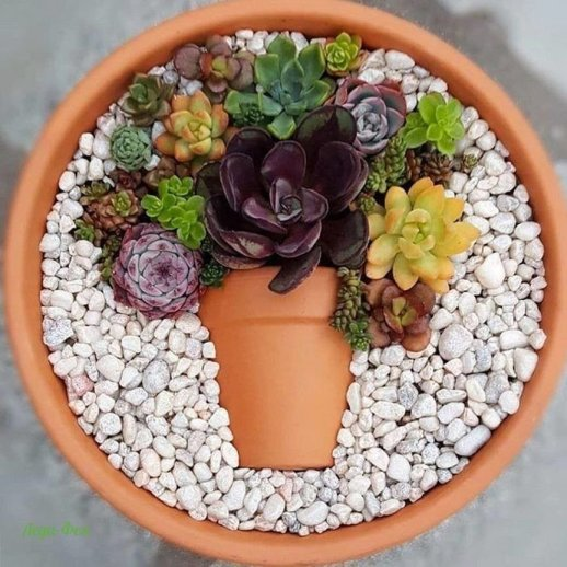 terracotta for succulents