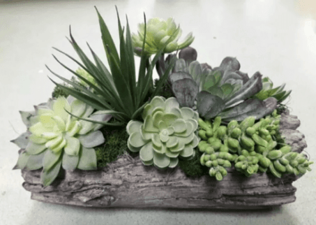 wooden pots for cacti