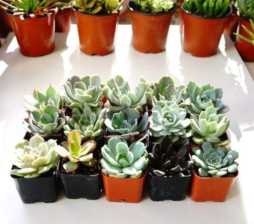 plastic containers for succulents