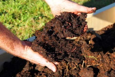 peat moss for lawn care in spring
