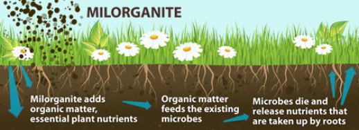 What Is Milorganite? Why I Apply It To My Lawn? 1