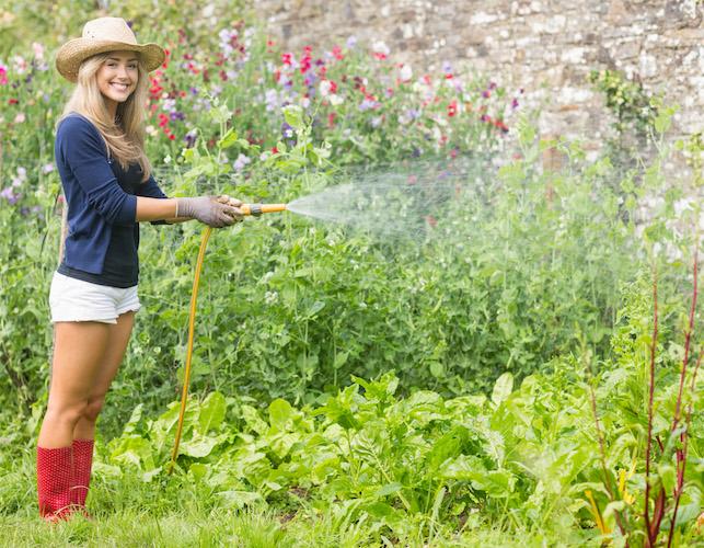 Gardening for Dummies - Backyard Riches on Gardening  id=95196