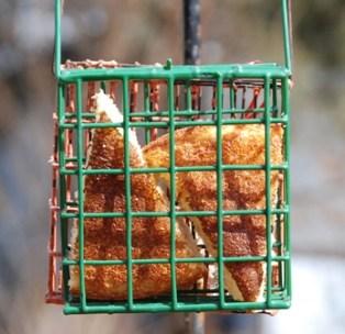 Cornbread for the birds