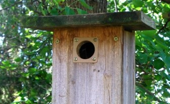 nesting-box-equipped-with-a-hole__-guard