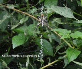 SPIDER WEB - BLOG - 25 May 2018