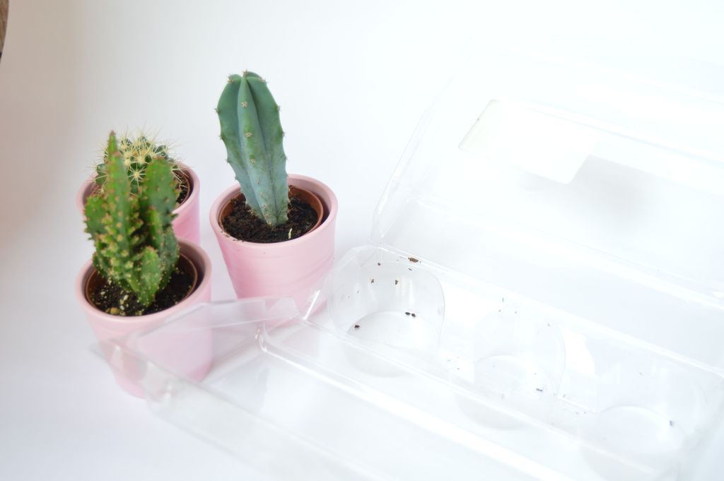 cactus-fuera-envoltorio