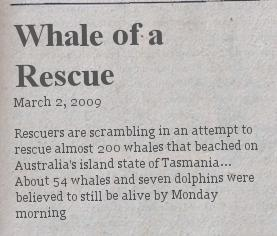 whale-of-a-rescue