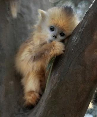 cutest monkey