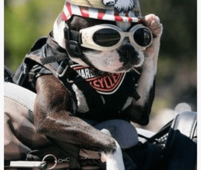 Motorcycle Helmets For Dogs Protecting Your Best Friend