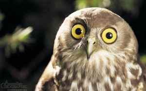 shocked owl