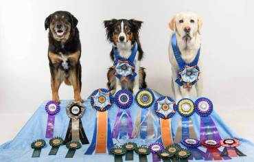 The Baker Dogs - 2015 AKC National Agility Championships