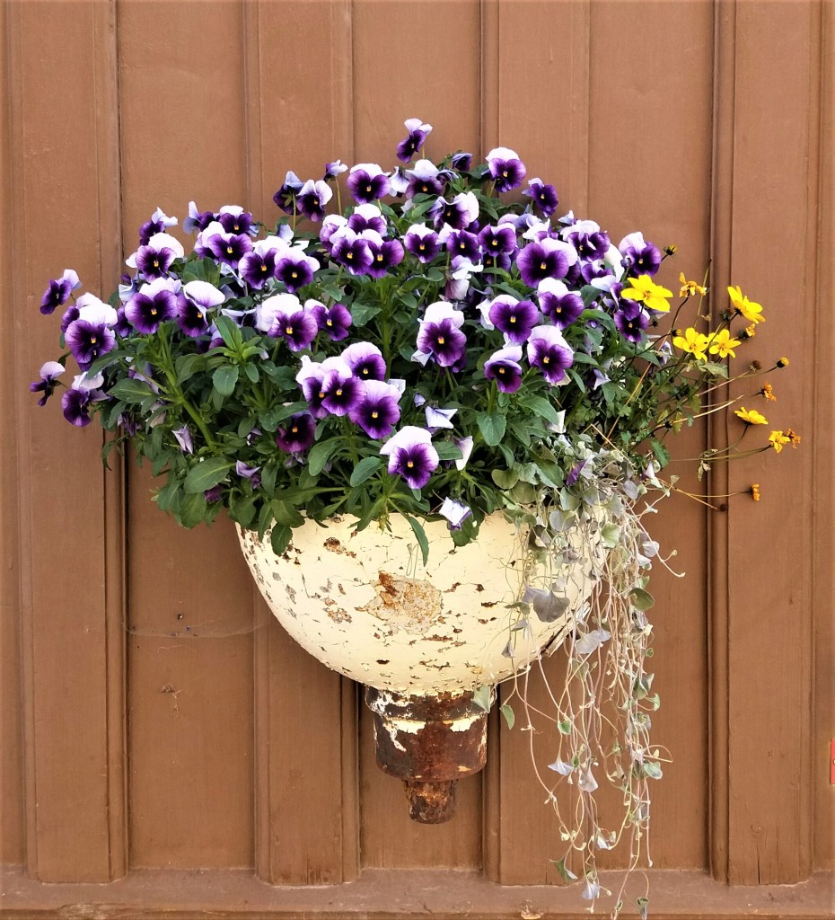 gammel utslagsvask som blomsterpotte